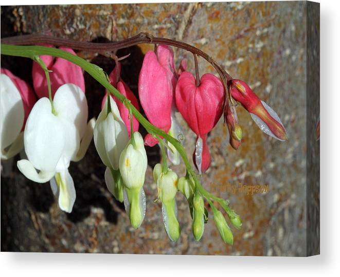 Flower Canvas Print featuring the photograph Pink And White by Kristy Jeppson