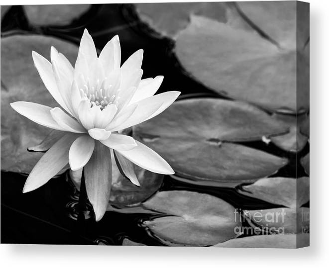 Landscape Canvas Print featuring the photograph Water Lily In The Lily Pond by Sabrina L Ryan