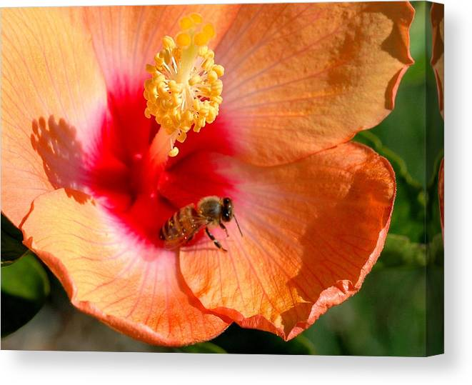 Nature Canvas Print featuring the photograph Always by Al Cash
