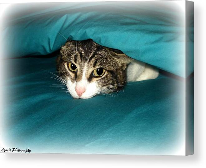 Cat Canvas Print featuring the photograph Bed Time by Desiree Lyon