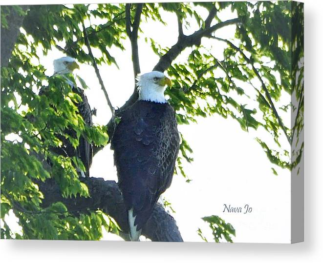 Nature Canvas Print featuring the photograph Eagle Court by Nava Thompson