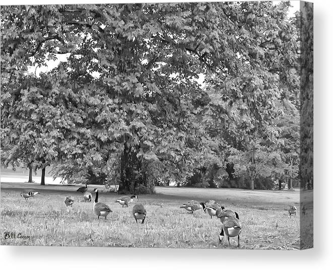 Geese Canvas Print featuring the photograph Geese By The River by Bill Cannon