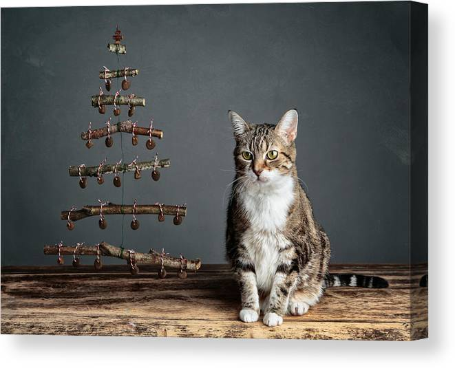 Cat Canvas Print featuring the photograph Cat Christmas by Nailia Schwarz
