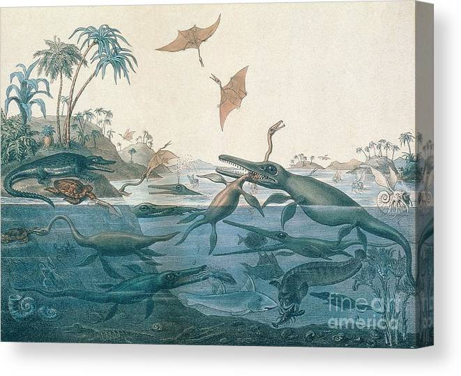 Duria Antiquior (ancient Dorset) Depicting A Imaginative Reconstruction Of The Life Of The Jurassic Seas Canvas Print featuring the drawing Ancient Dorset by Henry Thomas De La Beche