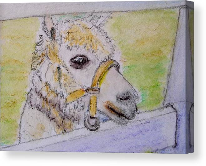 Baby Canvas Print featuring the drawing Baby Llama by Lessandra Grimley