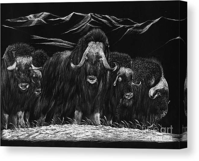 A Herd Of Bisons Gather On A Snowy Plane- Scratch Board Canvas Print featuring the painting Bisons by Mui-Joo Wee
