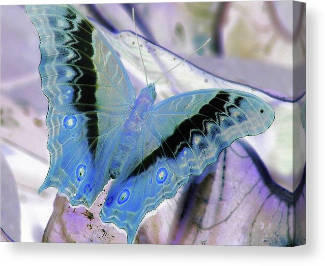 Butterfly Canvas Print featuring the photograph Blue Negative by JAMART Photography
