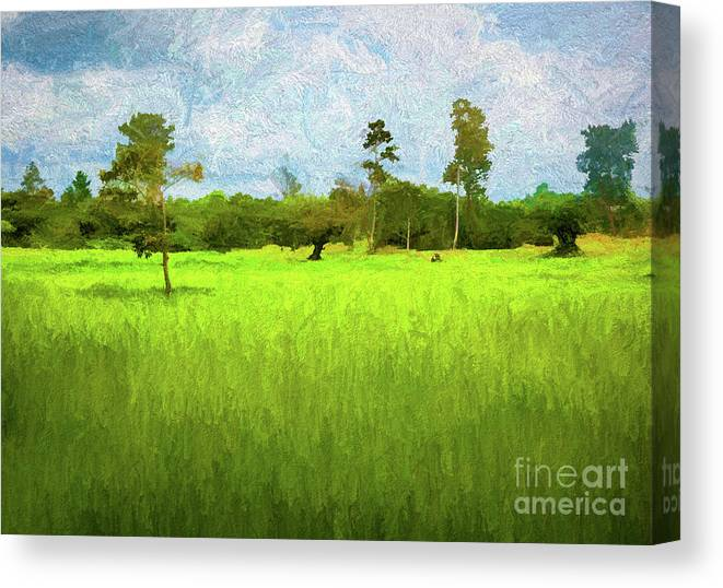 Cambodian Landscape Grass Trees Paint Canvas Print