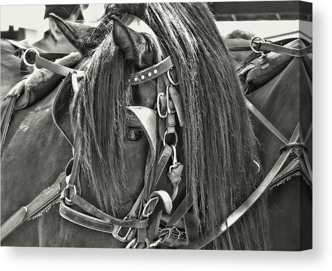 Horse Canvas Print featuring the photograph Carriage Horse Beauty by JAMART Photography
