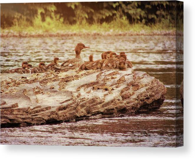 Bird Canvas Print featuring the photograph Crossing The River by JAMART Photography