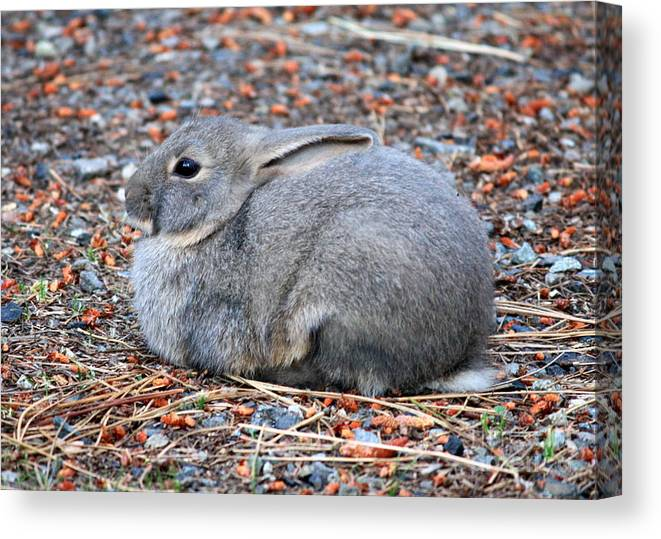 Rabbit Canvas Print featuring the photograph Cuddly Campground Bunny by Carol Groenen