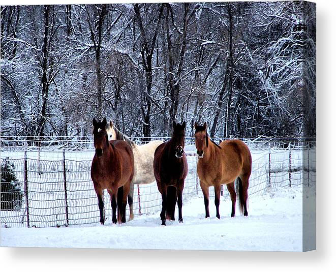 Horse Canvas Print featuring the photograph Equine Winter by Karen Scovill