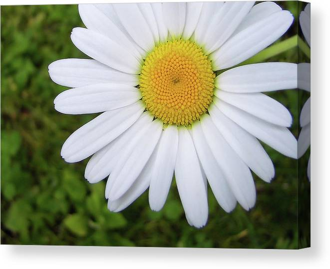 Flower Canvas Print featuring the photograph He Loves Me by JAMART Photography