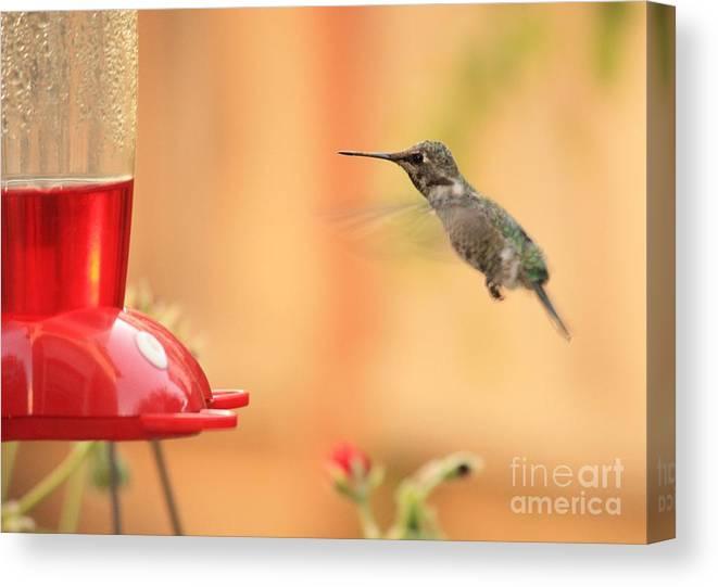 Hummingbird Canvas Print featuring the photograph Hummingbird And Feeder by Carol Groenen