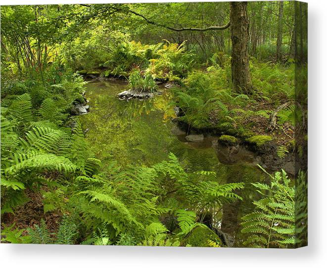 Forest Canvas Print featuring the photograph In The Heart Of The Forest by Stephen Vecchiotti