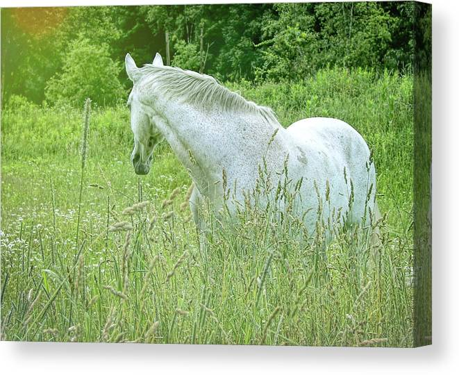 Horse Canvas Print featuring the photograph In The Meadow by JAMART Photography