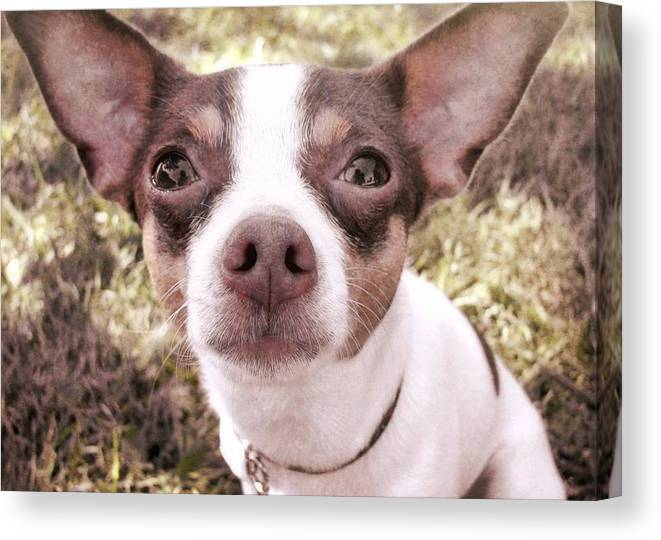 Dog Canvas Print featuring the photograph Miss Lily by JAMART Photography