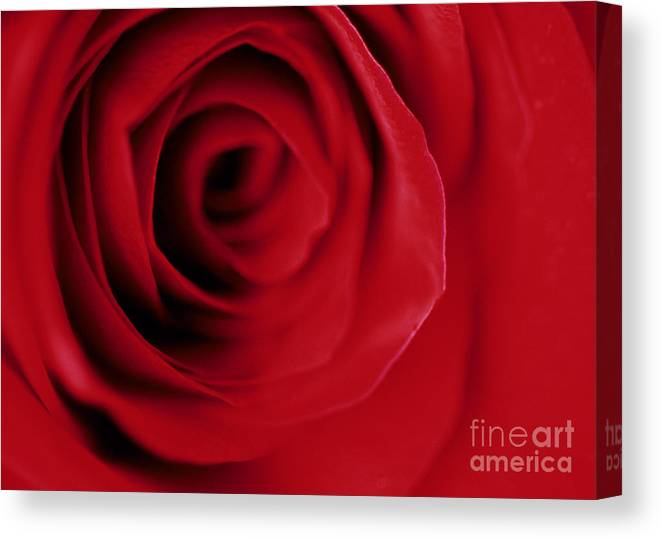 Rose Canvas Print featuring the photograph Red Rose Macro by Nancy Hoyt Belcher
