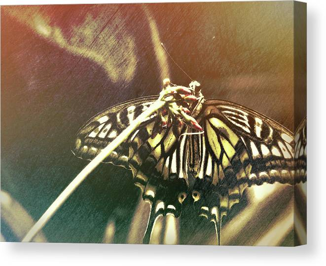 Butterfly Canvas Print featuring the photograph Swallowtail by JAMART Photography