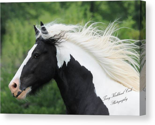 Equine Canvas Print featuring the photograph The Perfect Stallion by Terry Kirkland Cook