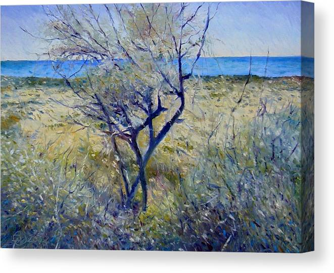 Impressionism Canvas Print featuring the painting Tree At Aseeb Oman 2002 by Enver Larney