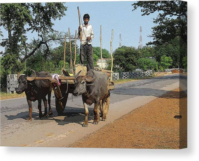 Animal Transport Canvas Print featuring the digital art Young Buffalo Cart Driver by Chandrashekhar Sahukar