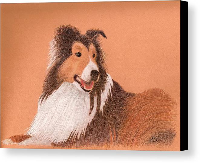 Sheltie Canvas Print featuring the drawing Morgan by Ally Benbrook