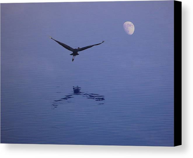 Nature Canvas Print featuring the photograph Fly To The Moon by Eric Workman