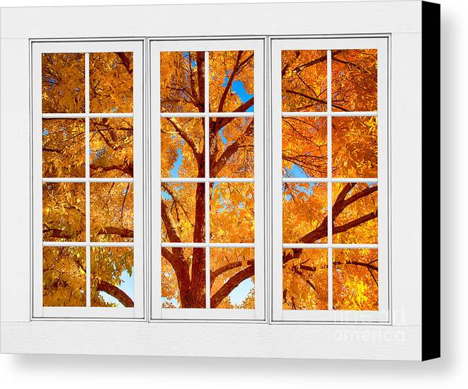 Autumn Maple Tree View Through A White Picture Window Frame Canvas