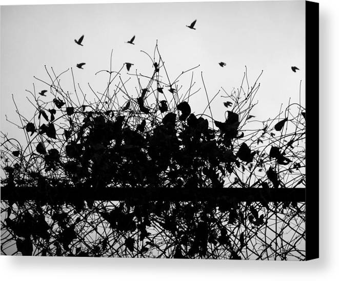 Street Photography. Black And White Canvas Print featuring the photograph Behind Enemy Lies by The Artist Project