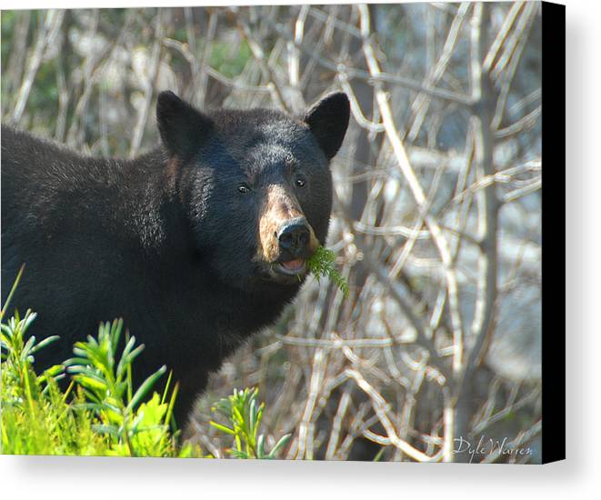 Bear Canvas Print featuring the photograph Roadside Diner - Close Up by Dyle  Warren