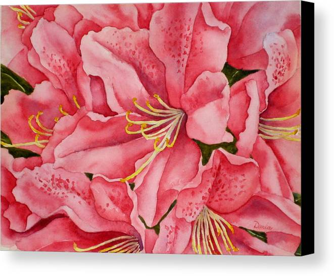 Watercolor Canvas Print featuring the painting Spring Azalea by Darla Brock