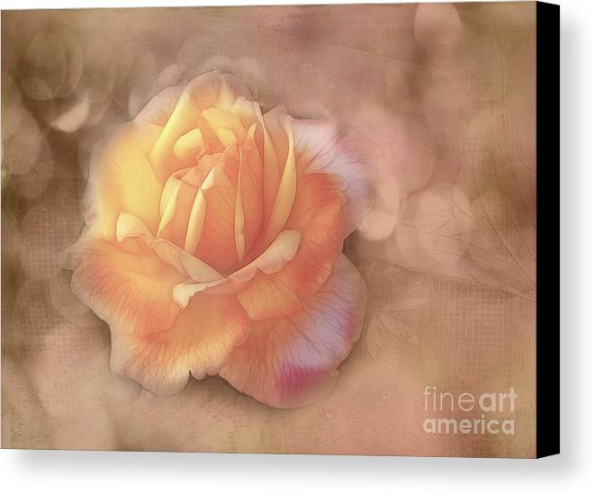 Rose Canvas Print featuring the photograph Faded Memories by Judi Bagwell