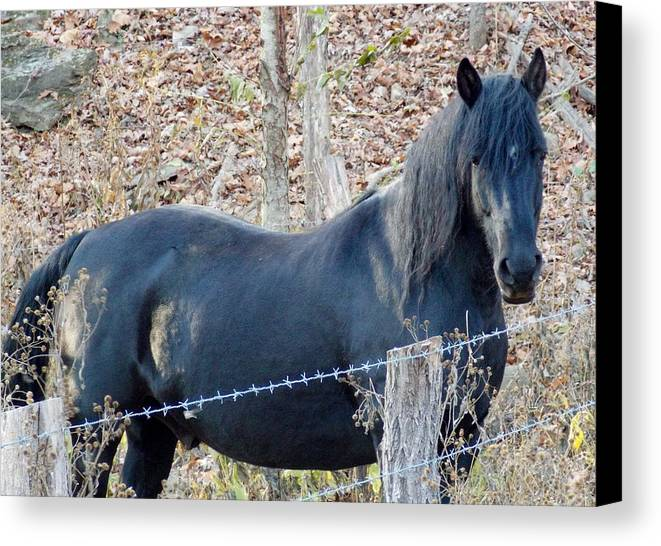 Black Horse Canvas Print featuring the photograph Free Spirited by Angelika MacDonald