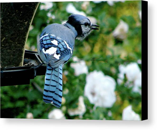 Bluejay Canvas Print featuring the photograph On Guard by Kay Jantzi