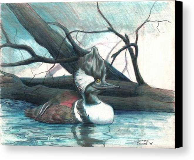 Duck Merganser Duck Pond Water Lake Birds Nature Wildlife Canvas Print featuring the drawing Merganser Duck by Raymond Doward