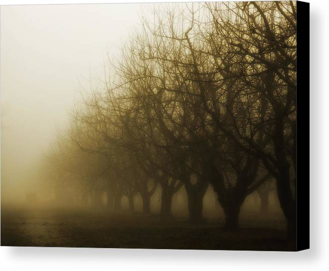 Sepia Canvas Print featuring the photograph Orchard In Fog by Rebecca Cozart