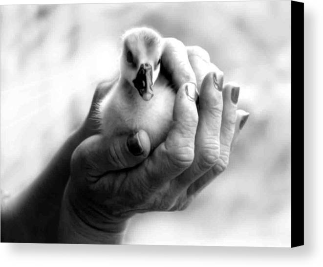 New Canvas Print featuring the photograph A New Life by Lee M Plate