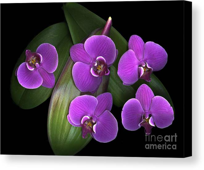 Purple Canvas Print featuring the photograph Bees On Green by Christian Slanec