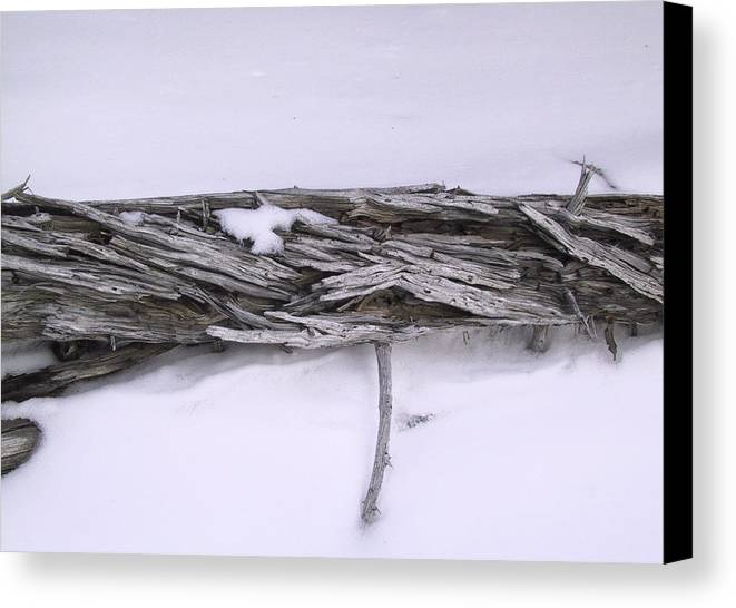Tree Canvas Print featuring the photograph Blue Banff-14 by Kevin Callahan