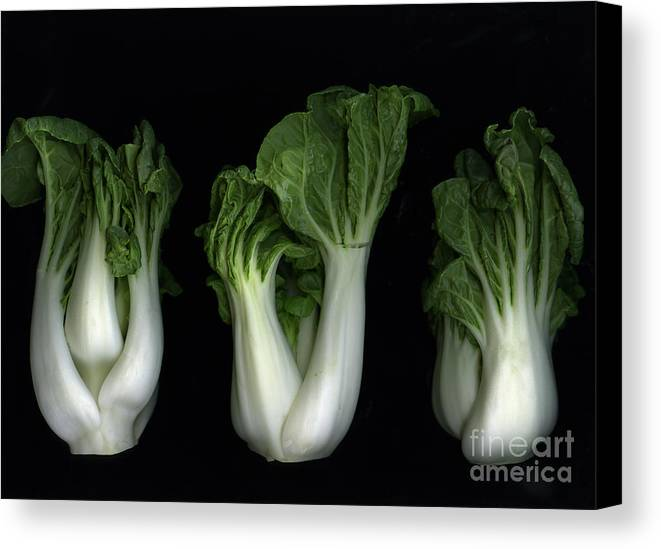 Slanec Canvas Print featuring the photograph Bok Choy by Christian Slanec