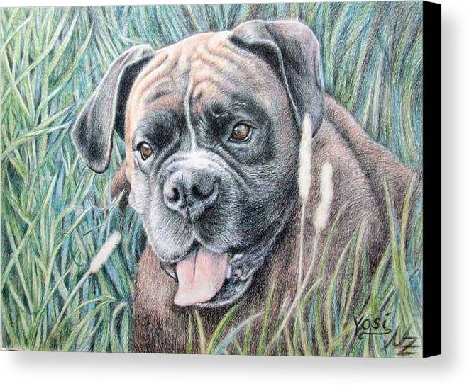 Dog Canvas Print featuring the drawing Boxer Yosi by Nicole Zeug