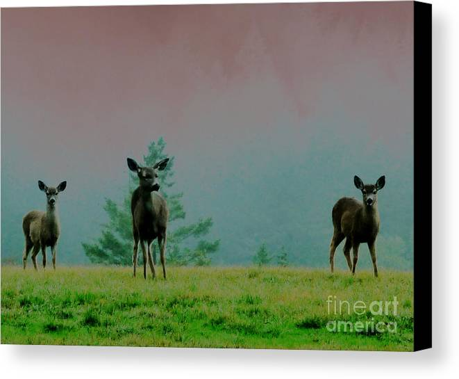 Deer Canvas Print featuring the photograph Cautious Neighbors by JoAnn SkyWatcher