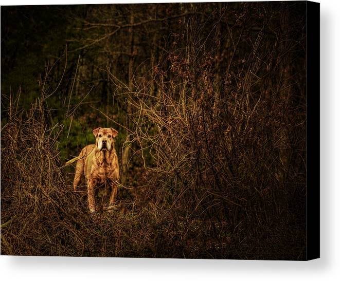 Animal Canvas Print featuring the photograph Deep Mountain Sentinel by John Kimball
