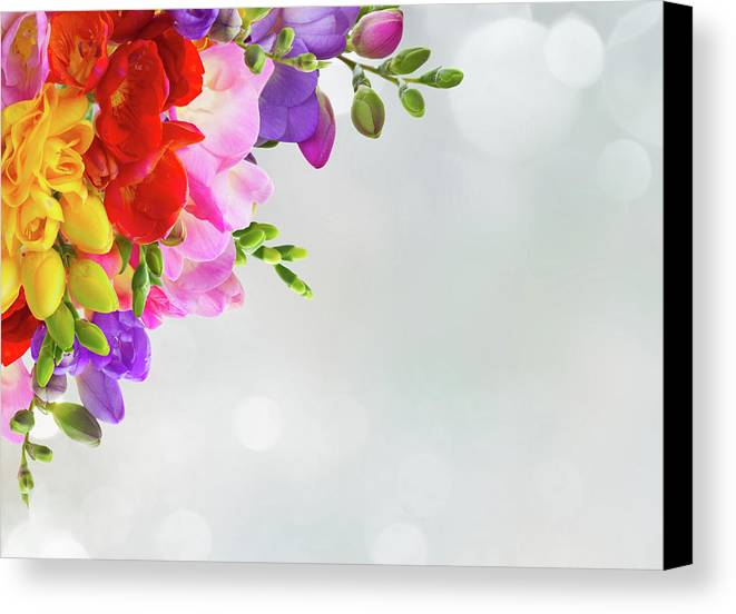 Freesia Canvas Print featuring the photograph Fresh Freesia Flowers On Blue by Anastasy Yarmolovich