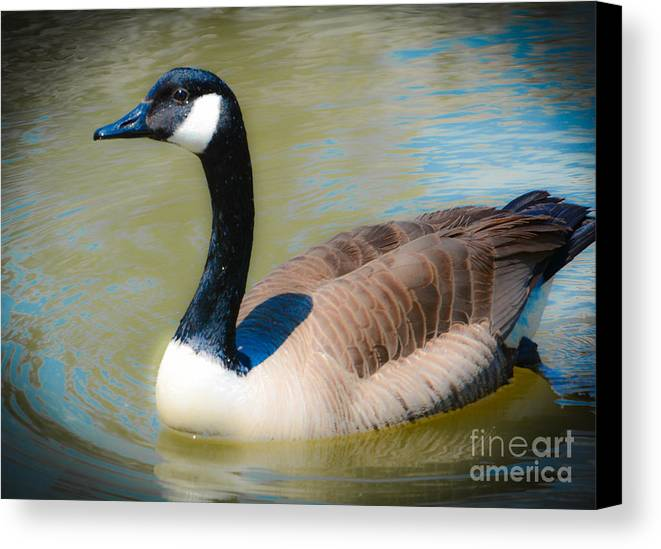 Goose Canvas Print featuring the photograph Gander At A Goose by Lisa Kilby