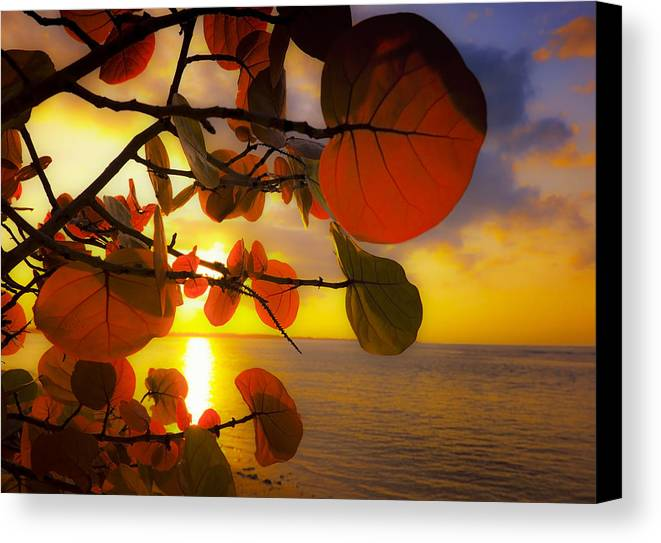 Beach Canvas Print featuring the photograph Glowing Red II by Stephen Anderson