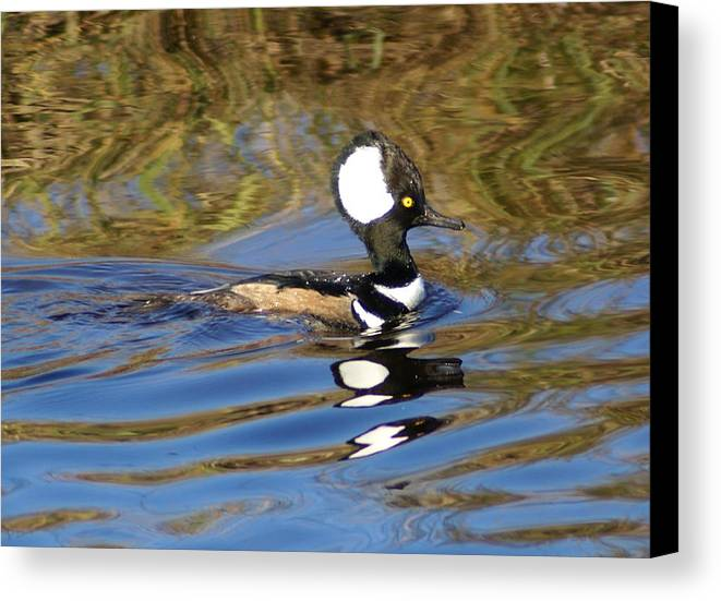 Duck Canvas Print featuring the photograph Hooded Mersanger by Debbie May