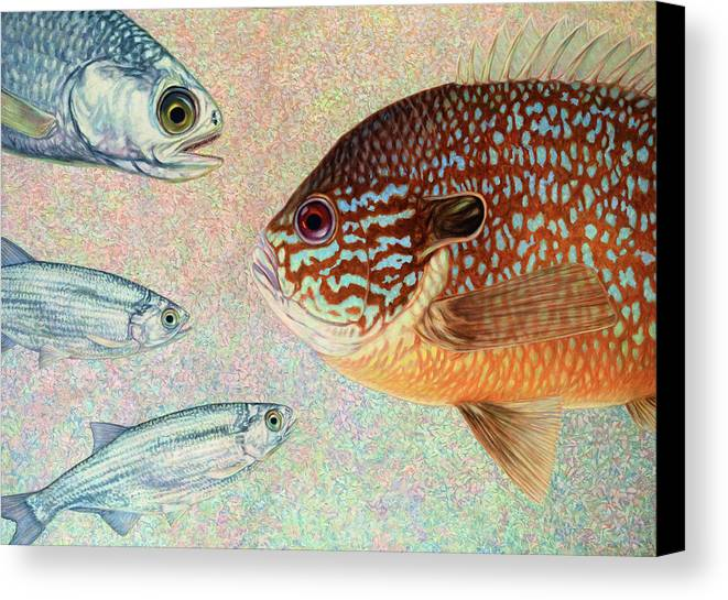 Fish Canvas Print featuring the painting Mooneyes, Sunfish by James W Johnson