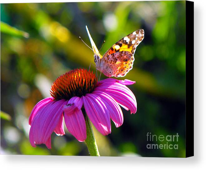 Painted Lady Butterfly Canvas Print featuring the photograph Painted Lady by Jan Tribe